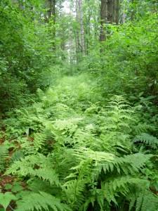 WWOA ferns