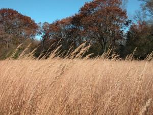 Woodstone Prairie