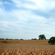Clouds & Cornfields