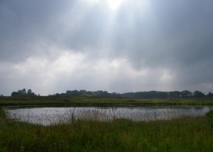 Town of Linn wetland
